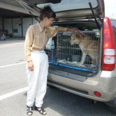 救出した犬を連れてスクリーニング・テスト、相双保健所にて