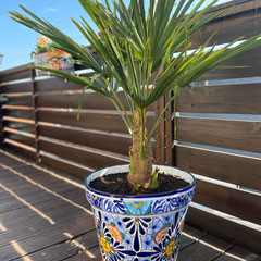 Bunter Blumenkübel mit Palme