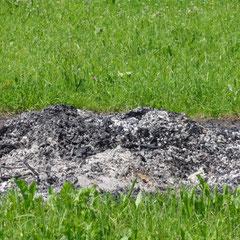Infiziertes Material wird verbrannt (Foto: NABU Langenargen)