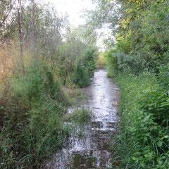 Überschwemmter Weg im Seehag (Foto: NABU Langenargen)