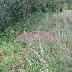 Unberechtigtes Ablagern von Grünschnitt (Foto: NABU Langenargen)