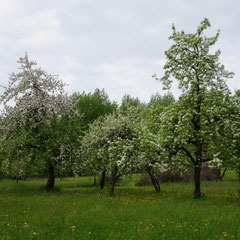 Mai 2013 (Foto: NABU Langenargen)