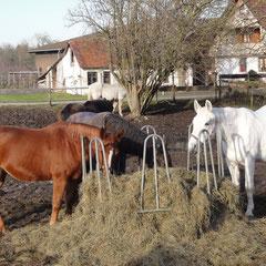Die zellulosereiche und eiweißarme Streue ist als Pferdefutter gut geeignet. (Foto: NABU Langenargen)
