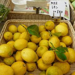 農薬や化学肥料、除草剤などを使用していないレモンです。