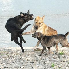 Schweinehund- Sport für Mensch+Hund