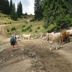 Apuseni, Padis, west karpaten, wandelen Roemenie
