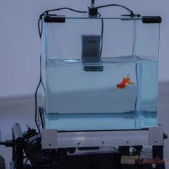 5 Machine 2 Fish, exosquelette pour poisson rouge. 2016. Quentin Destieu, Sylvain Huguet. Octobre numérique, Espace van Gogh, Arles