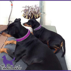 Louie und Diego mit ihren Partnerhalsbändern