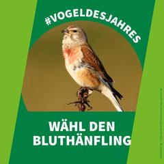 https://www.nabu.de/tiere-und-pflanzen/voegel/portraets/bluthaenfling/