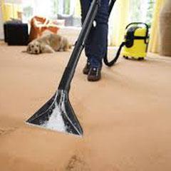 процесс химчистки ковров на дому в Москве, Новой Москве и Московской области