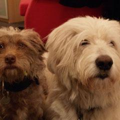 Pinky und Lucy - unsere beide Hunde