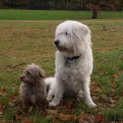 Pinky und Lucy im Park