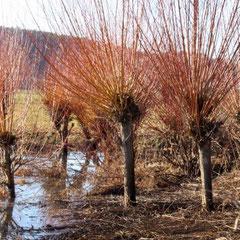 Weiden bei Neuses / Windsbach