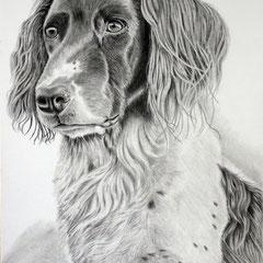 Debbie, Graphit auf Bristol, ca 30 x 40 cm, Fotovorlage: Andrea Girardi