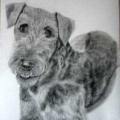Minja, Airdale Terrier, ca. 30 x 40 cm. Fotovorlage: Familie Schock