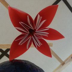 Une fleur de pavot