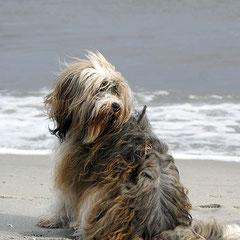 Milka am Strand