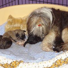 F-Wurf - 2,5 Wochen alt - Milka und die Kids
