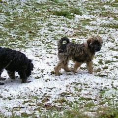 Yeshi und Femi und der erste Schnee