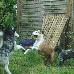 Spiel und Spaß mit Nachbarshund