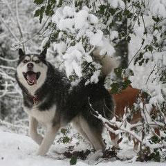 Warum kann denn nicht immer Schnee liegen?