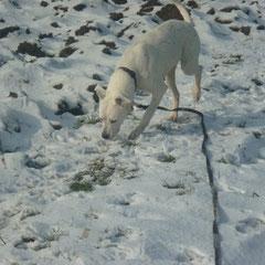 """Dogo Argentino sagt """"Don´t crop, let flop"""""""
