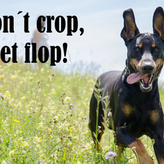 "Django der Dobermann aus dem Wiesental sagt ""Don´t crop, let flop"""