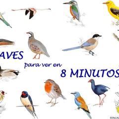 """""""15 aves para ver en 8 Minutos"""" es el dossier que incluye las fichas de nuestro taller DibujAves"""