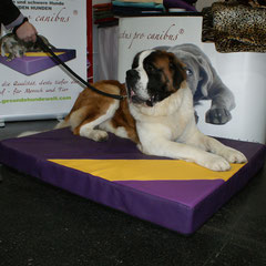 XXL orthopädische Hundebetten Lectus pro canibus  Die Materialien des Bettes werden auf das Körpergewicht des Hundes abgestimmt um den Bewegungsapparat best möglichst zu unterstützen! Maßgefertigt in Größe und Farbe