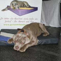 Orthopädisch - medizinisches Hundebett Lectus pro canibus® aus medizinischem Viskoschaum von Gesunde Hundewelt zum Entspannen und Erholen nach dem erfolgreichen Messeauftritt in Graz
