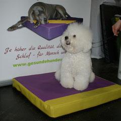 Medizinische Hundebetten in farbenfrohen Kunstleder für unsere wunderschönen Kleinen!