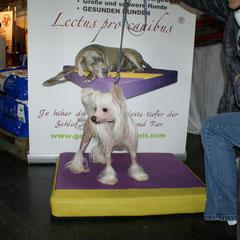 Medizinische Hundebetten Lectus pro canibus in schicken Farbkombinationen passend für jeden Hund