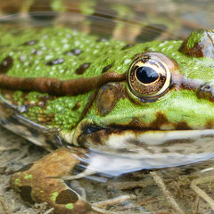 2016:  The world in the frog's eye, Neerach (Switzerland)