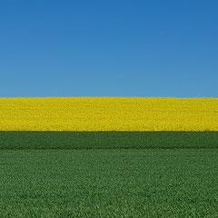 2020:  Farmland in Buchberg (Switzerland)