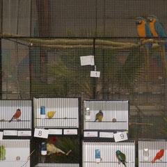 Oiseaux soumis au vote des écoliers pour la désignation du lauréat du prix de la municipalité.