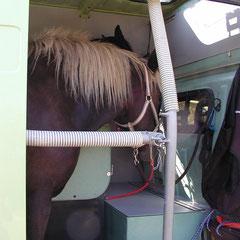 Aménagement avec deux chevaux