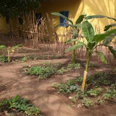 Der Garten in Tubakuta