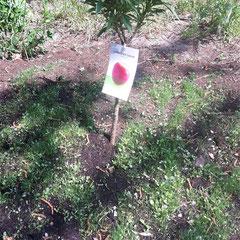 Frisch gepflanzt in unserem Garten