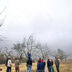 Während Michael Lehmann den Erhaltungsschnitt an einem mittelalten Baum demonstriert, ziehen Kraniche über die Magertriften