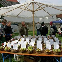 Achtzig Apfelsorten, alle aus der Ober-Mörler Gemarkung - dieser Schatz muss erhalten werden!