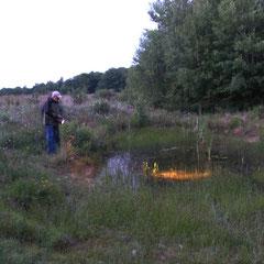 Mit einer starken Lampe wurde nach Amphibien gesucht