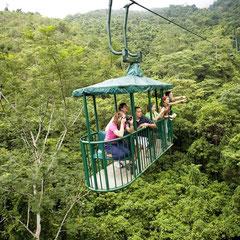 Rainforest Tram