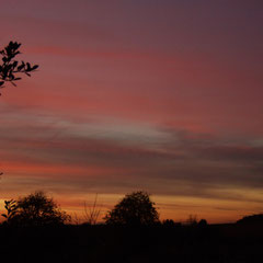 Sundown on the Plain (from our garden)