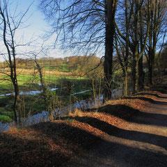 A shady track on a sunny morning (Walk 4)