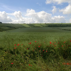 Wiltshire Downland   (Walk 9)