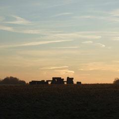 Sunrise near Stonehenge  (Walk 6)