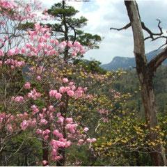 夏木山頂部の花