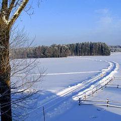 idyllische Langlaufloipen bei Plößberg