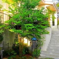 新築に伴う造園工事「リビングからの眺めを楽しむ庭」©miyamori design