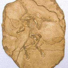 Moulage d'un fossile d'archéoptérix, le plus ancien oiseau connu datant de 150 milliond d'années.